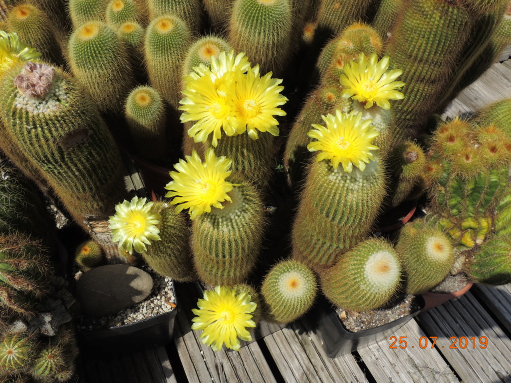 Cacti and Sukkulent in Köln, every day new flowers in the greenhouse Part 220 Bild3894