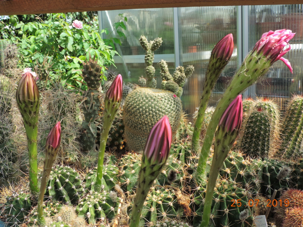 Cacti and Sukkulent in Köln, every day new flowers in the greenhouse Part 220 Bild3909
