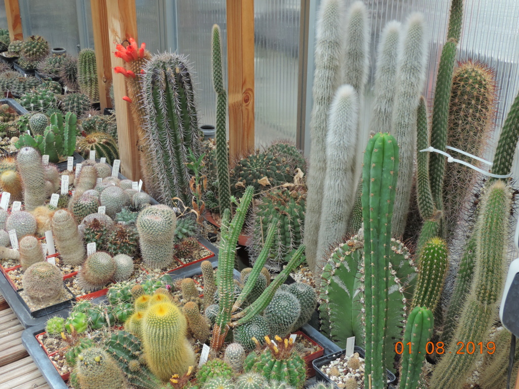 Cacti and Sukkulent in Köln, every day new flowers in the greenhouse Part 221 Bild3917