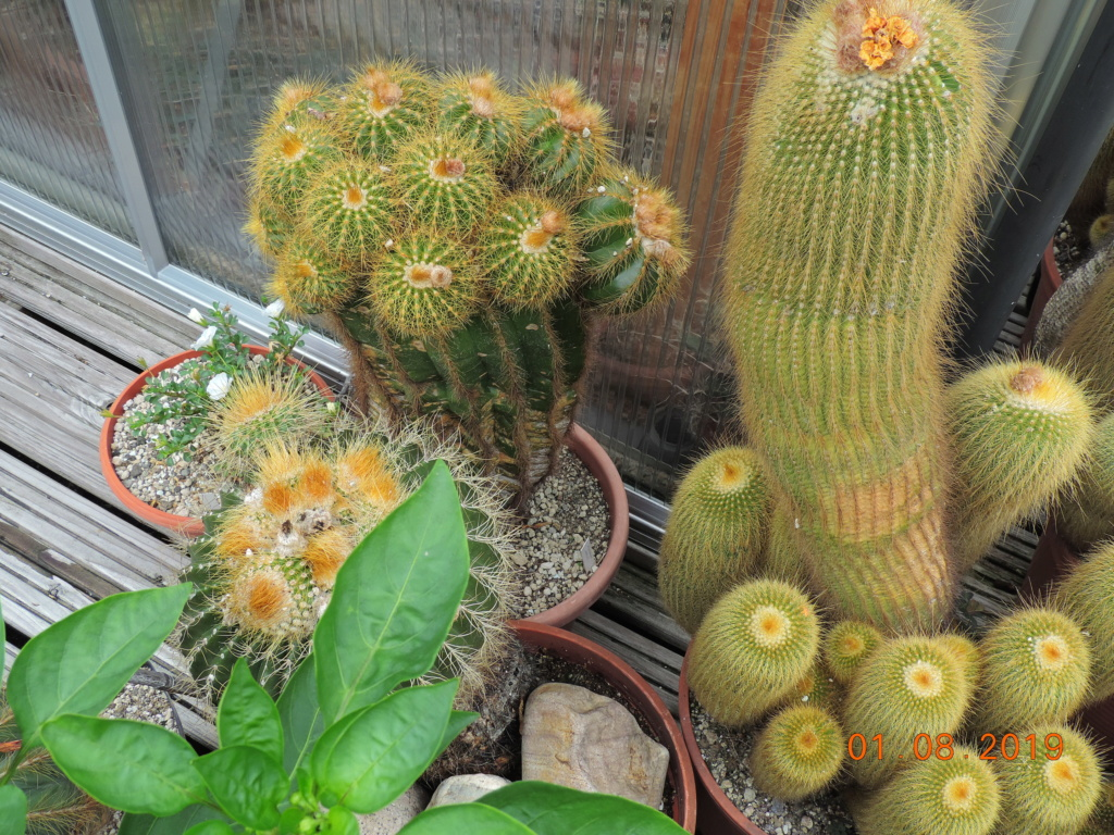 Cacti and Sukkulent in Köln, every day new flowers in the greenhouse Part 221 Bild3919