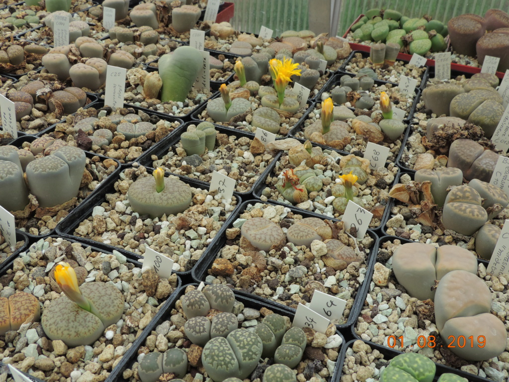 Cacti and Sukkulent in Köln, every day new flowers in the greenhouse Part 221 Bild3924