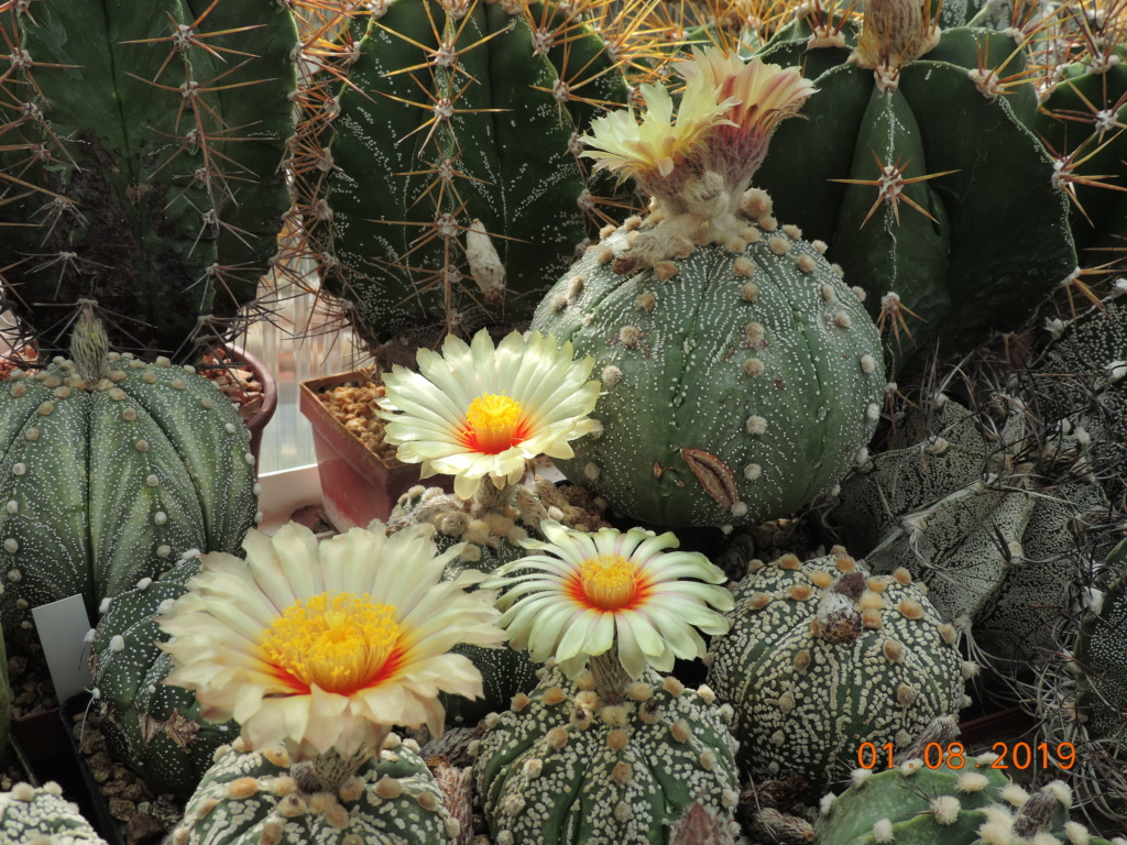 Cacti and Sukkulent in Köln, every day new flowers in the greenhouse Part 221 Bild3925
