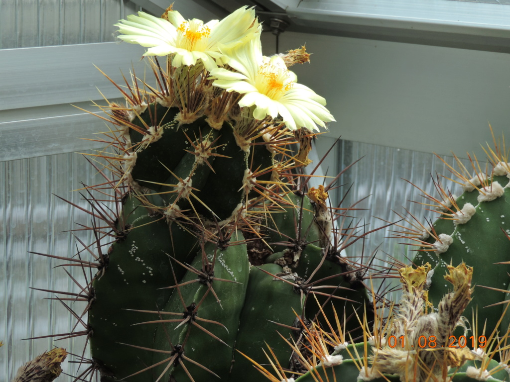 Cacti and Sukkulent in Köln, every day new flowers in the greenhouse Part 221 Bild3926
