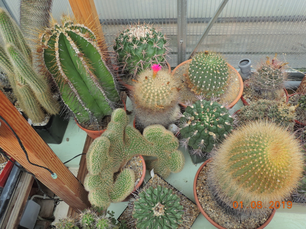 Cacti and Sukkulent in Köln, every day new flowers in the greenhouse Part 221 Bild3927