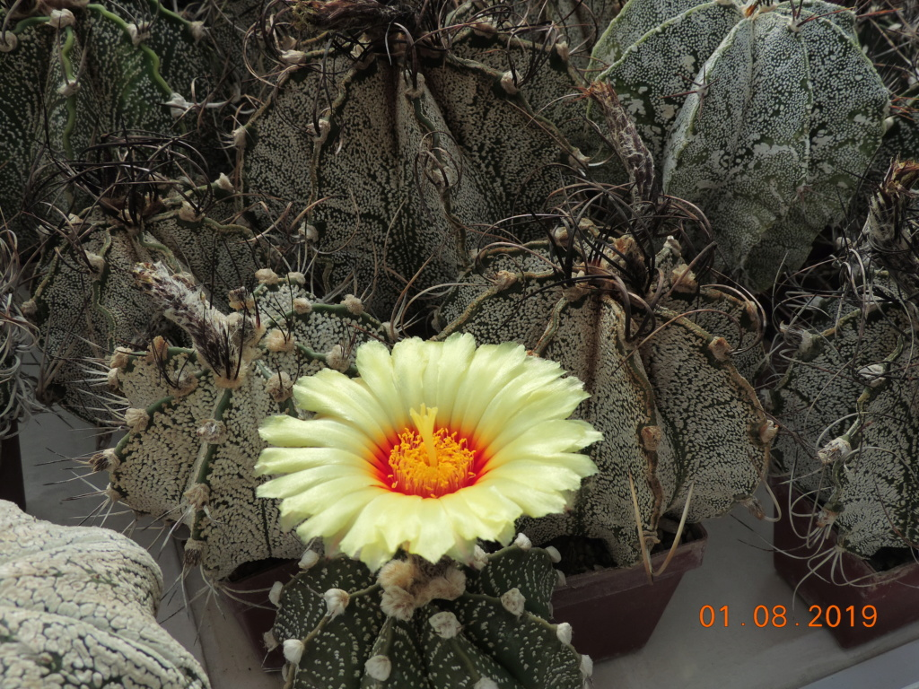 Cacti and Sukkulent in Köln, every day new flowers in the greenhouse Part 221 Bild3940