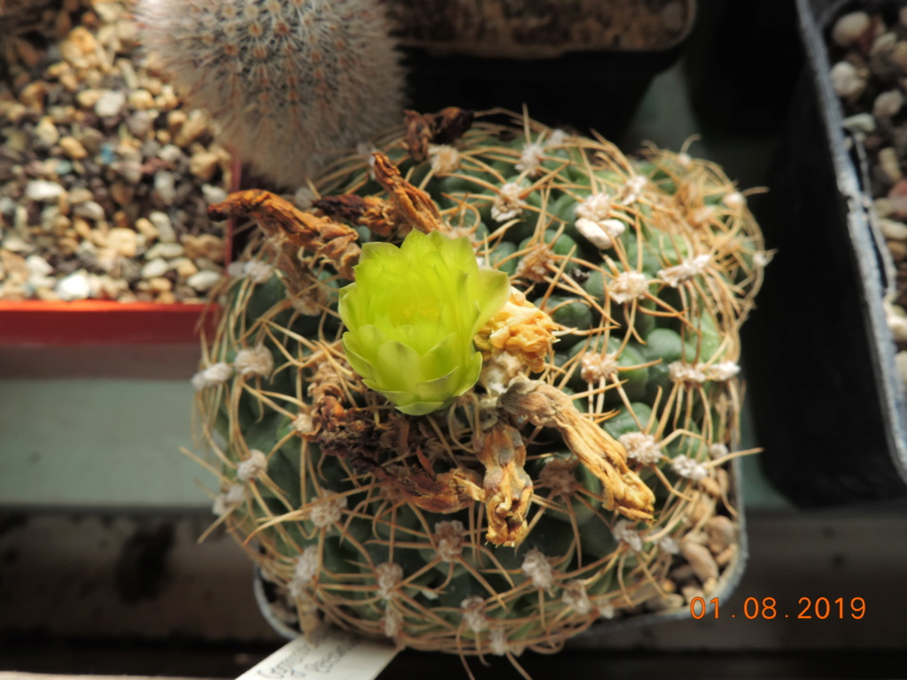 Cacti and Sukkulent in Köln, every day new flowers in the greenhouse Part 221 Bild3955