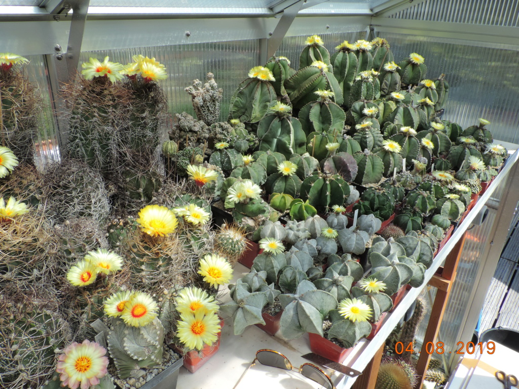 Cacti and Sukkulent in Köln, every day new flowers in the greenhouse Part 221 Bild3972