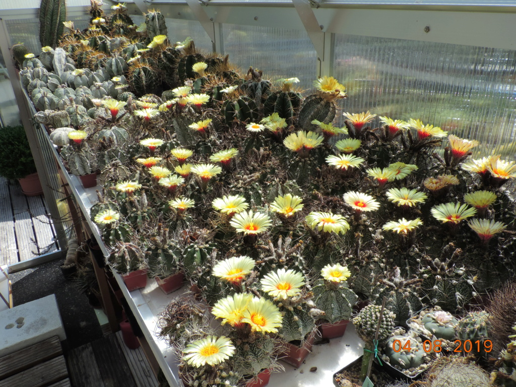 Cacti and Sukkulent in Köln, every day new flowers in the greenhouse Part 221 Bild3973