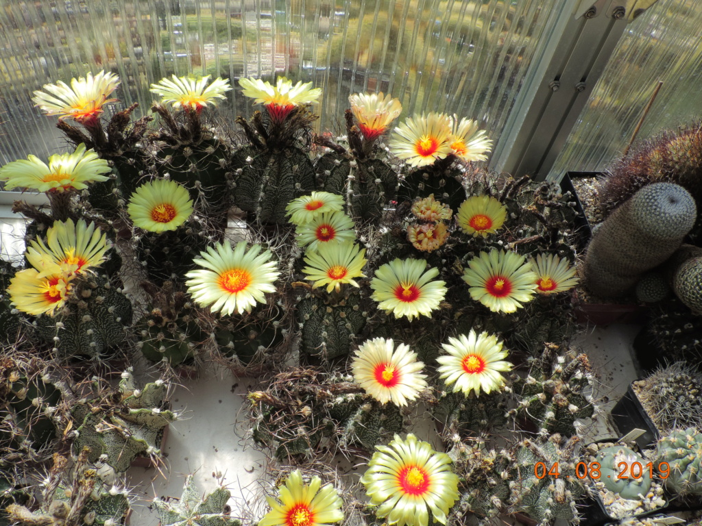 Cacti and Sukkulent in Köln, every day new flowers in the greenhouse Part 221 Bild3975