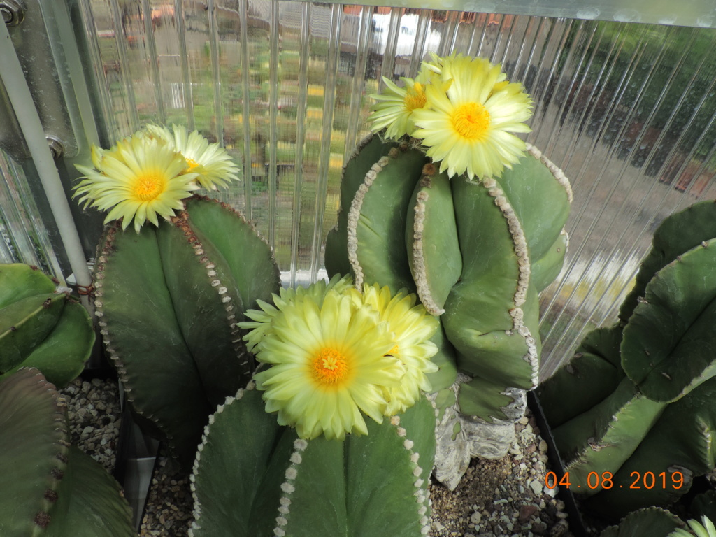 Cacti and Sukkulent in Köln, every day new flowers in the greenhouse Part 221 Bild3976