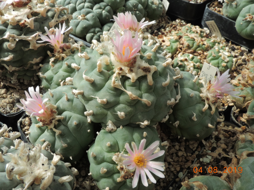 Cacti and Sukkulent in Köln, every day new flowers in the greenhouse Part 221 Bild3984