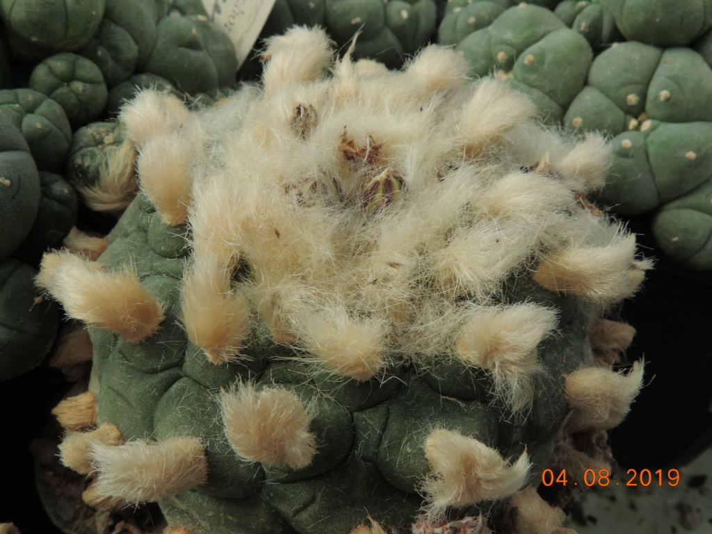 Cacti and Sukkulent in Köln, every day new flowers in the greenhouse Part 221 Bild3985