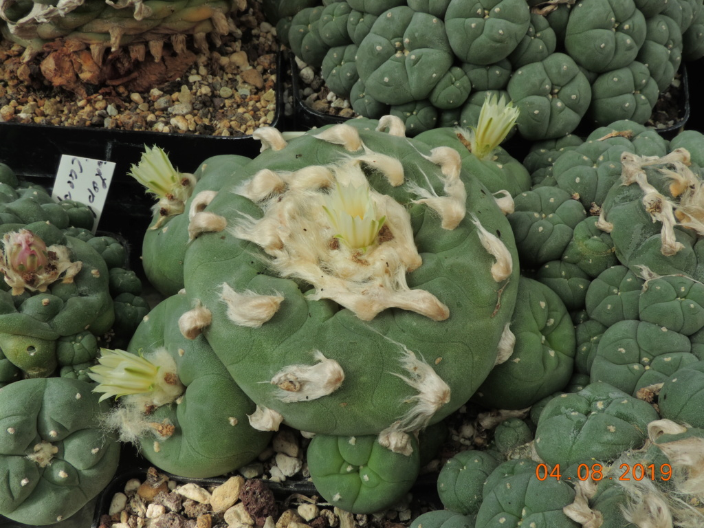 Cacti and Sukkulent in Köln, every day new flowers in the greenhouse Part 221 Bild3986