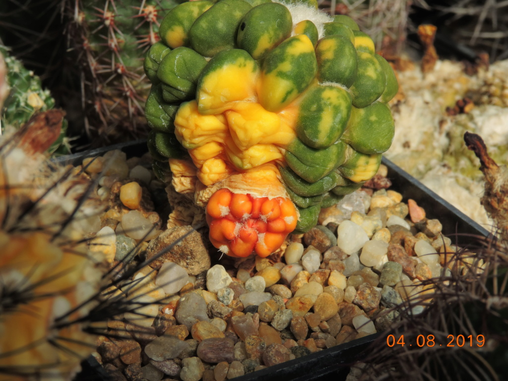 Cacti and Sukkulent in Köln, every day new flowers in the greenhouse Part 221 Bild3995