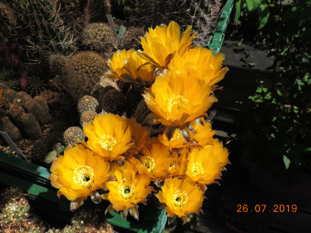 Cacti and Sukkulent in Köln, every day new flowers in the greenhouse Part 221 Bild3997