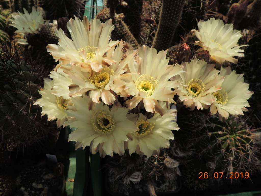 Cacti and Sukkulent in Köln, every day new flowers in the greenhouse Part 221 Bild3999