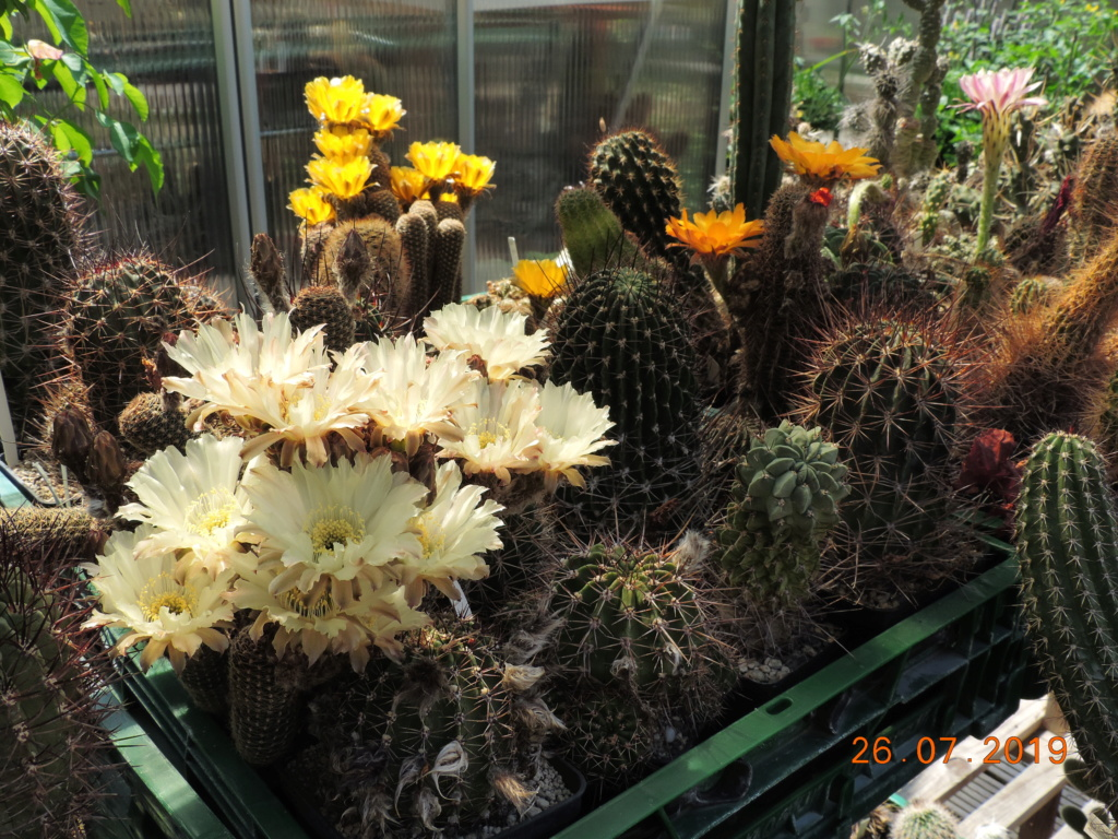 Cacti and Sukkulent in Köln, every day new flowers in the greenhouse Part 221 Bild4000