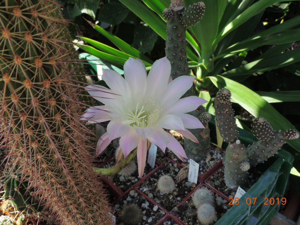 Cacti and Sukkulent in Köln, every day new flowers in the greenhouse Part 221 Bild4004