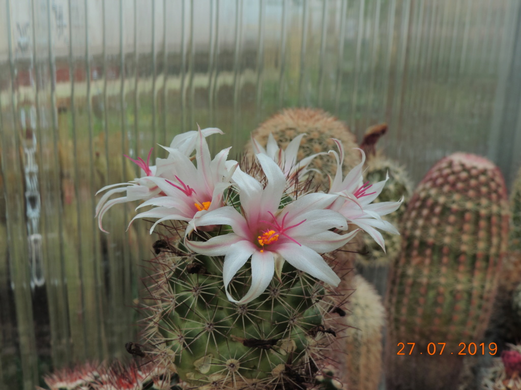Cacti and Sukkulent in Köln, every day new flowers in the greenhouse Part 221 Bild4010