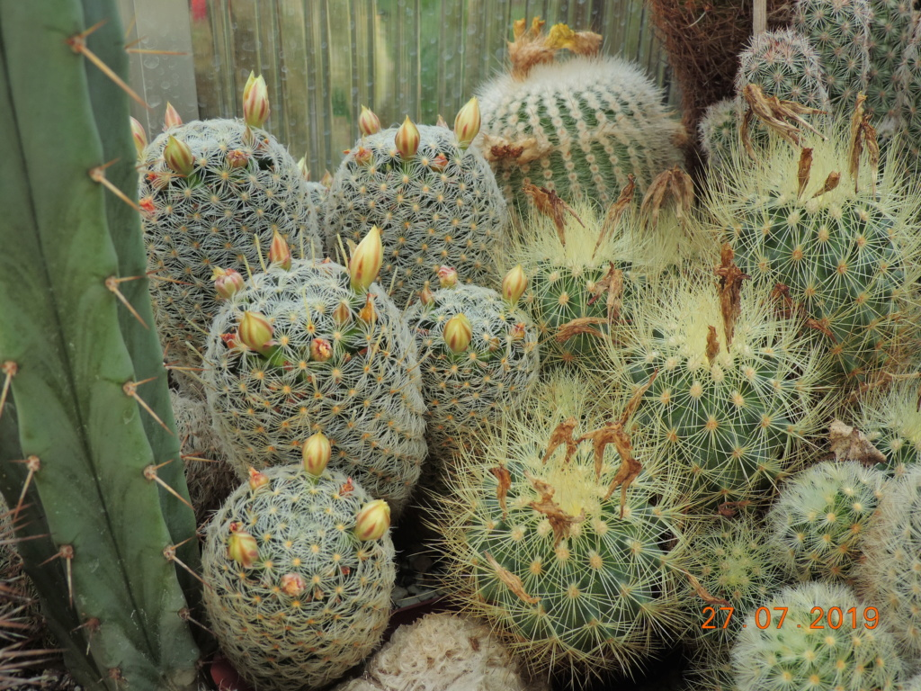 Cacti and Sukkulent in Köln, every day new flowers in the greenhouse Part 221 Bild4011