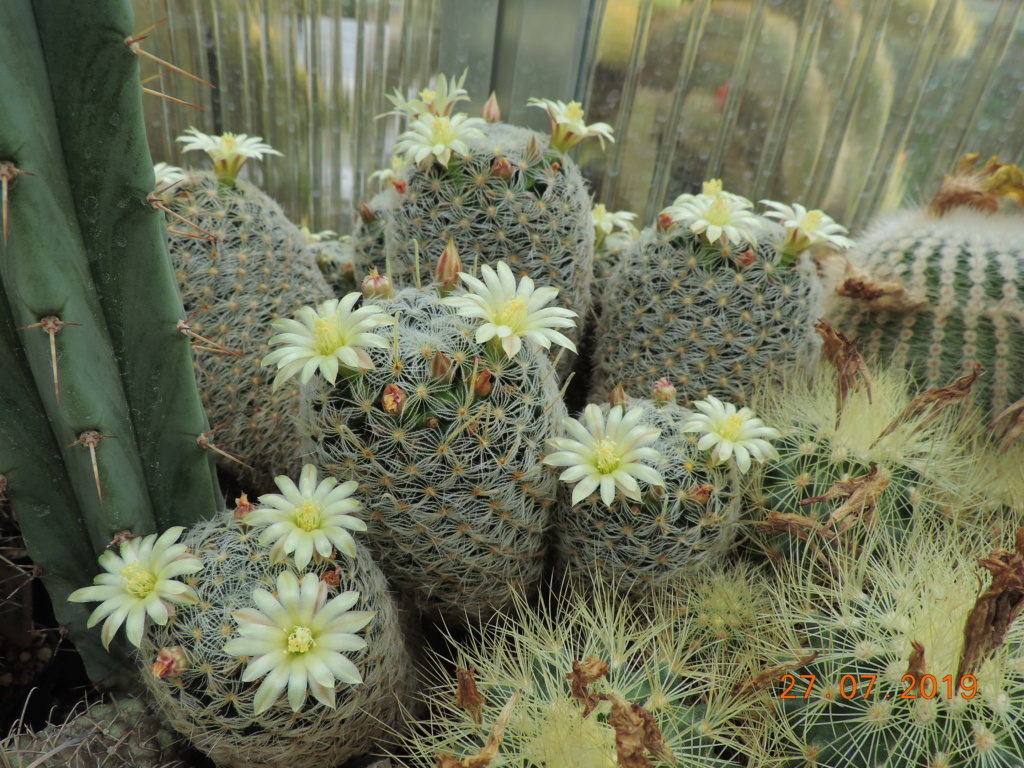 Cacti and Sukkulent in Köln, every day new flowers in the greenhouse Part 221 Bild4012