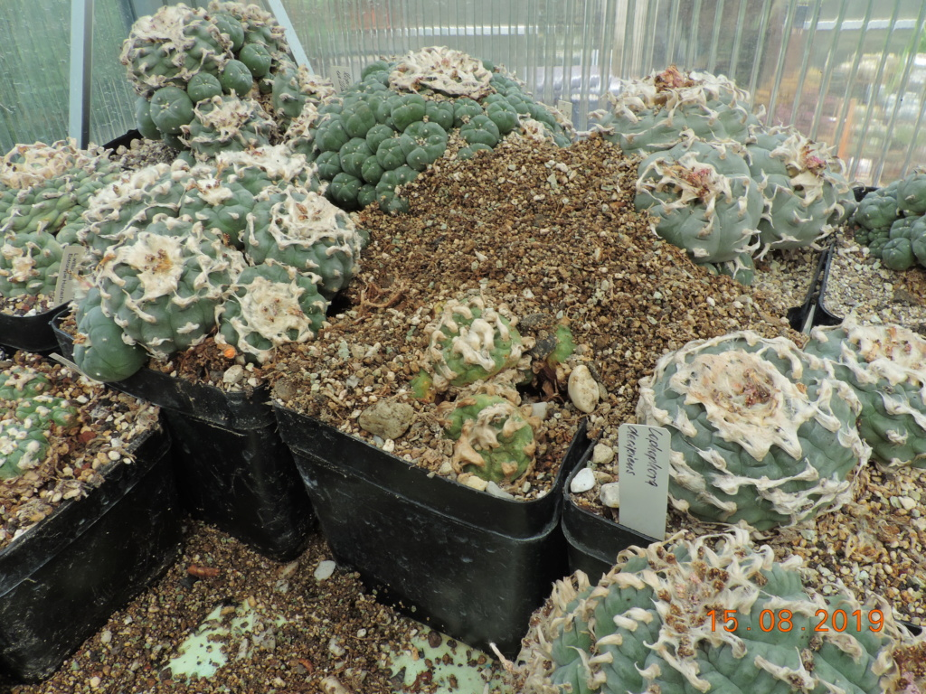 Cacti and Sukkulent in Köln, every day new flowers in the greenhouse Part 221 Bild4034