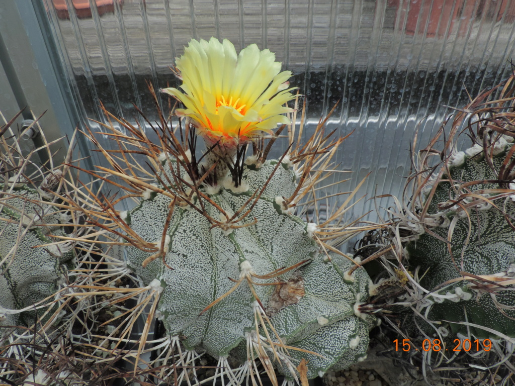 Cacti and Sukkulent in Köln, every day new flowers in the greenhouse Part 221 Bild4042