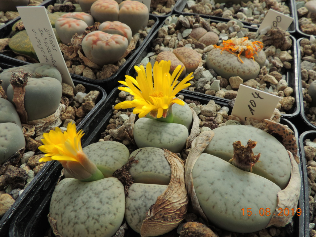 Cacti and Sukkulent in Köln, every day new flowers in the greenhouse Part 221 Bild4051