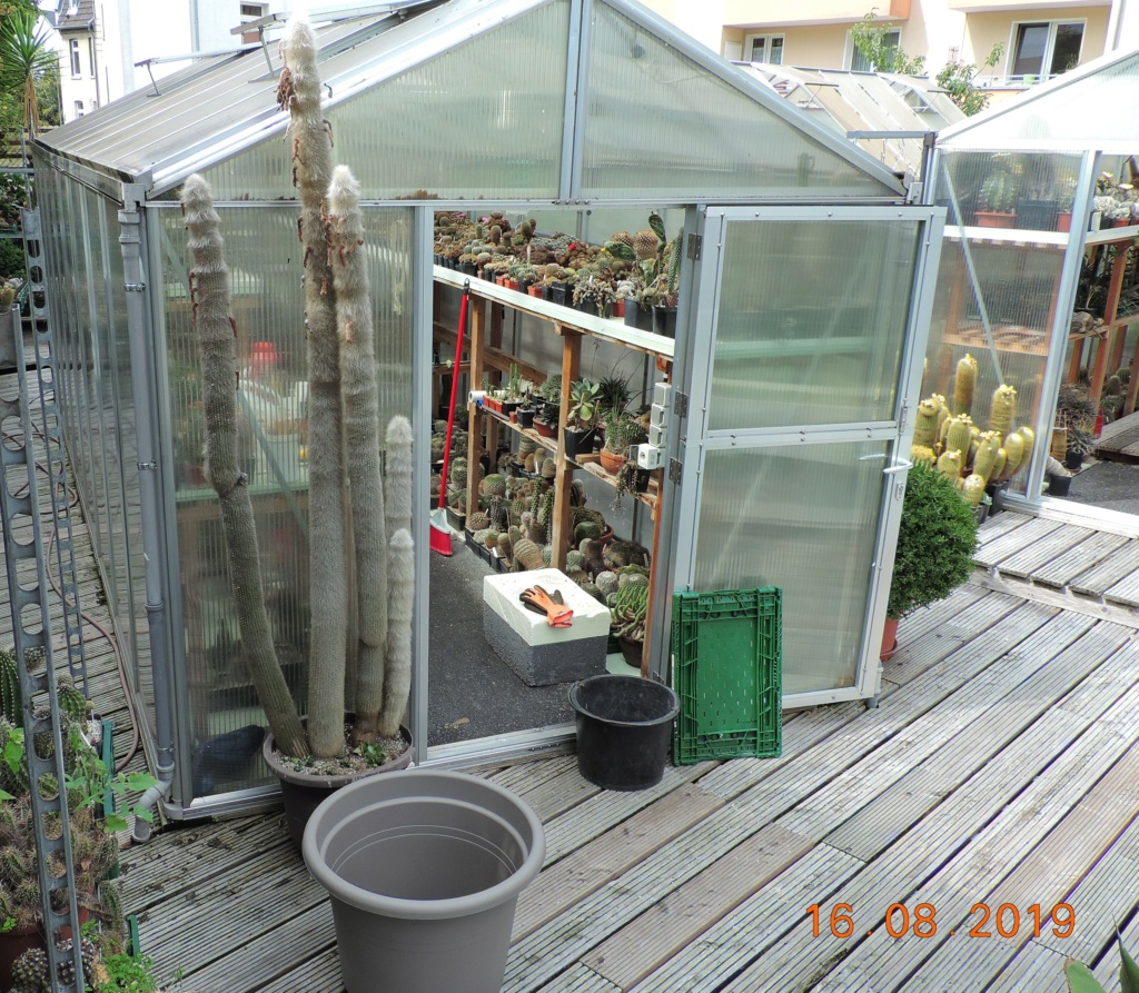 Cacti and Sukkulent in Köln, every day new flowers in the greenhouse Part 221 Bild4057