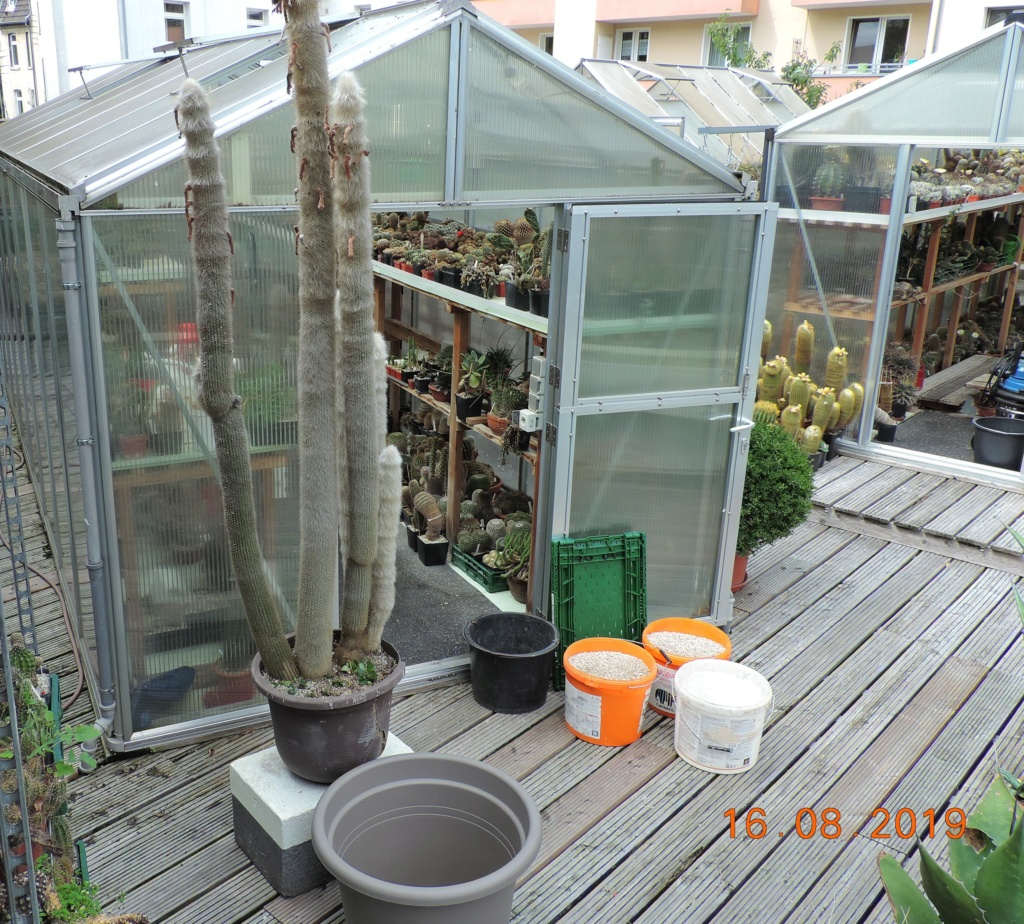 Cacti and Sukkulent in Köln, every day new flowers in the greenhouse Part 221 Bild4059
