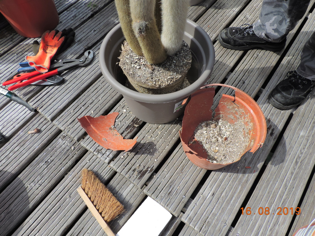 Cacti and Sukkulent in Köln, every day new flowers in the greenhouse Part 221 Bild4068