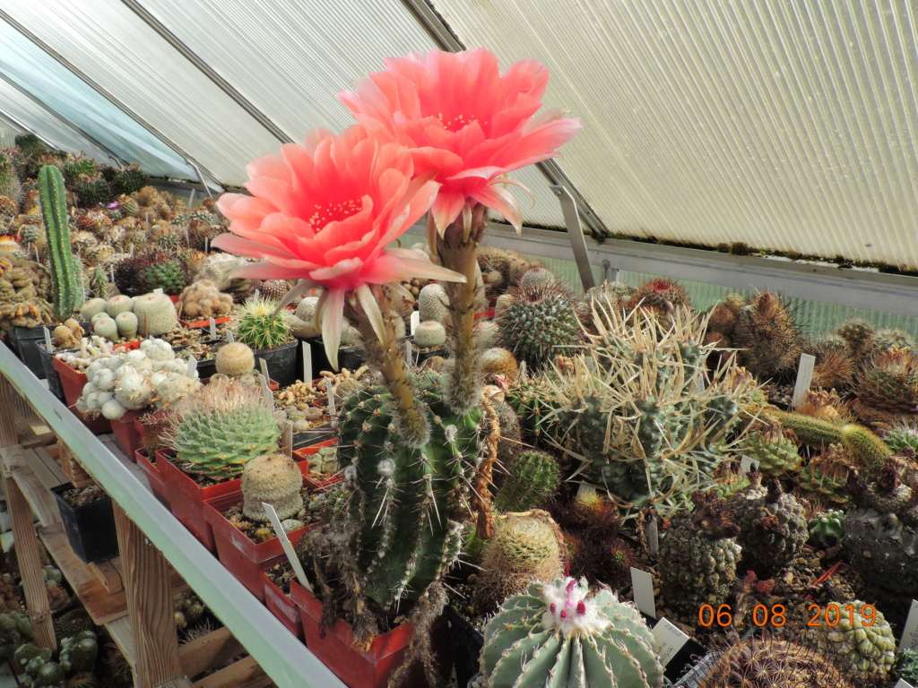Cacti and Sukkulent in Köln, every day new flowers in the greenhouse Part 222 Bild4080