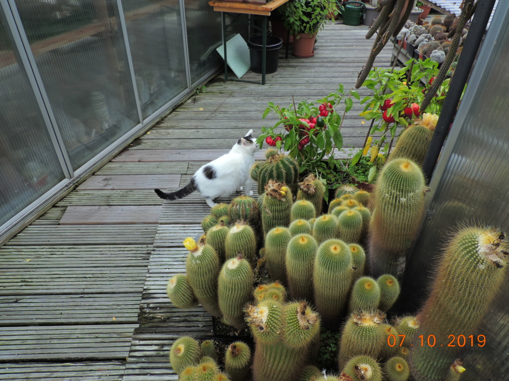 Cacti and Sukkulent in Köln, every day new flowers in the greenhouse Part 224 Bild4365