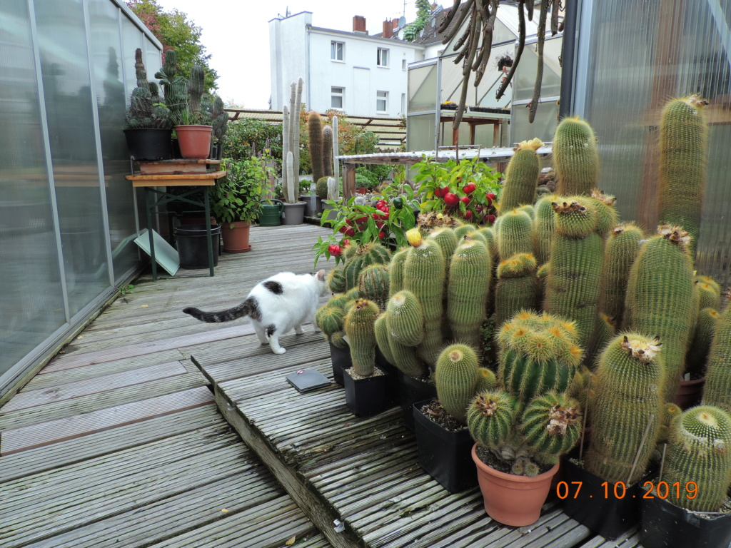 Cacti and Sukkulent in Köln, every day new flowers in the greenhouse Part 224 Bild4366