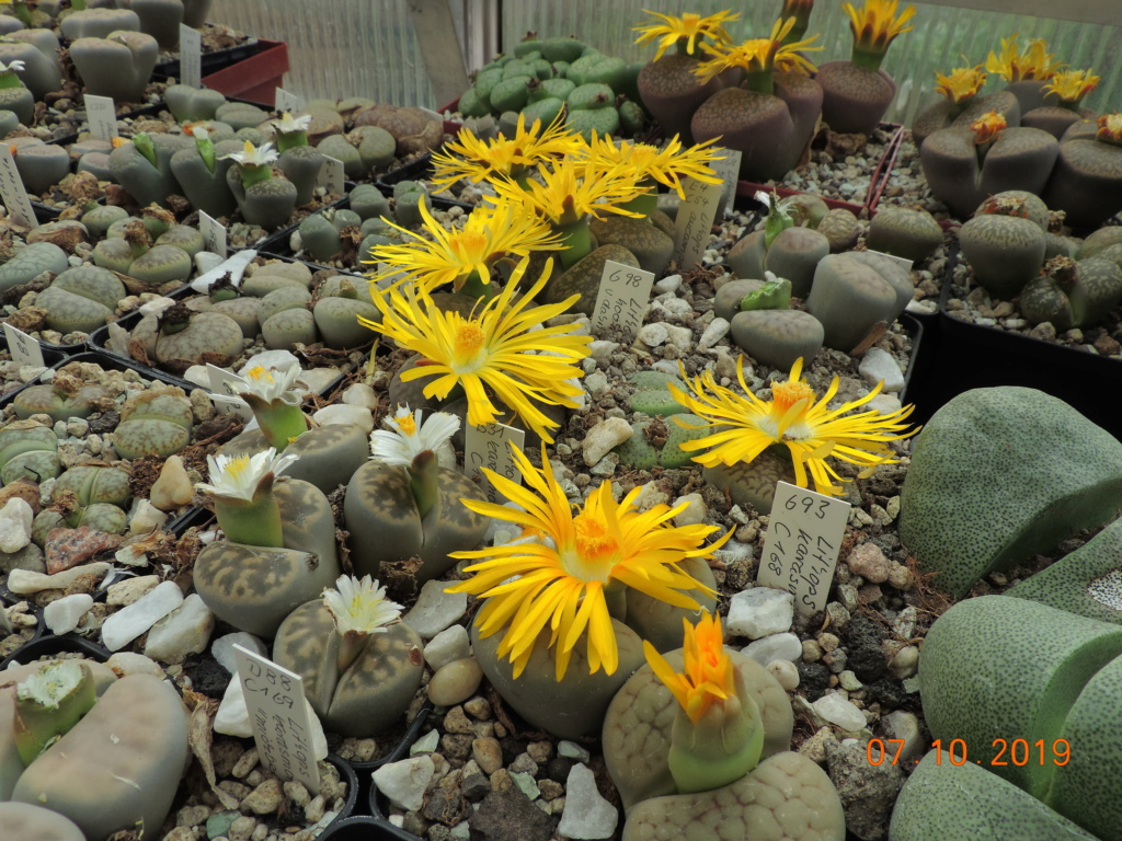 Cacti and Sukkulent in Köln, every day new flowers in the greenhouse Part 224 Bild4407