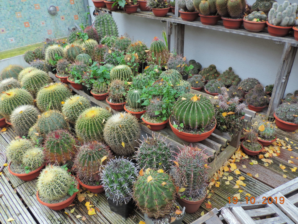Cacti and Sukkulent in Köln, every day new flowers in the greenhouse Part 225 Bild4440