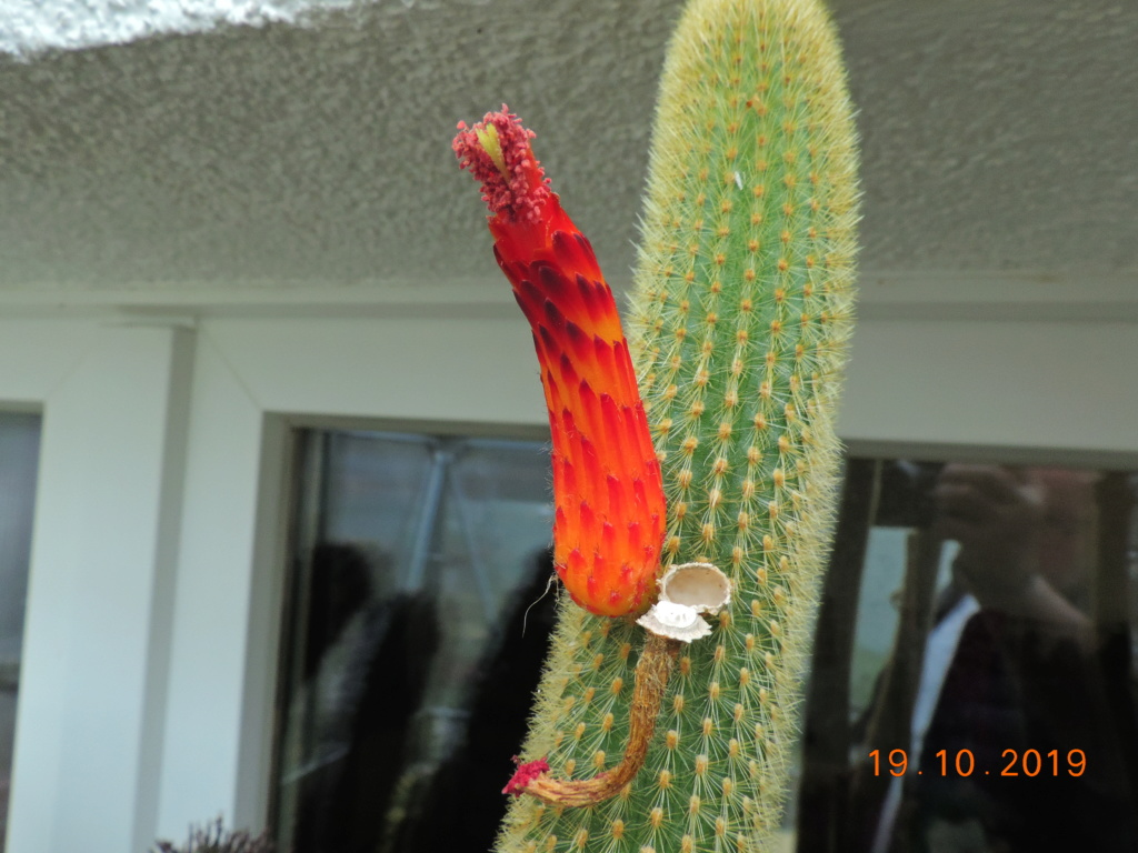 Cacti and Sukkulent in Köln, every day new flowers in the greenhouse Part 225 Bild4445