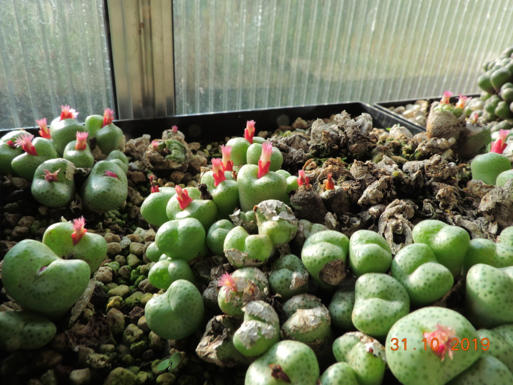 Cacti and Sukkulent in Köln, every day new flowers in the greenhouse Part 225 Bild4470