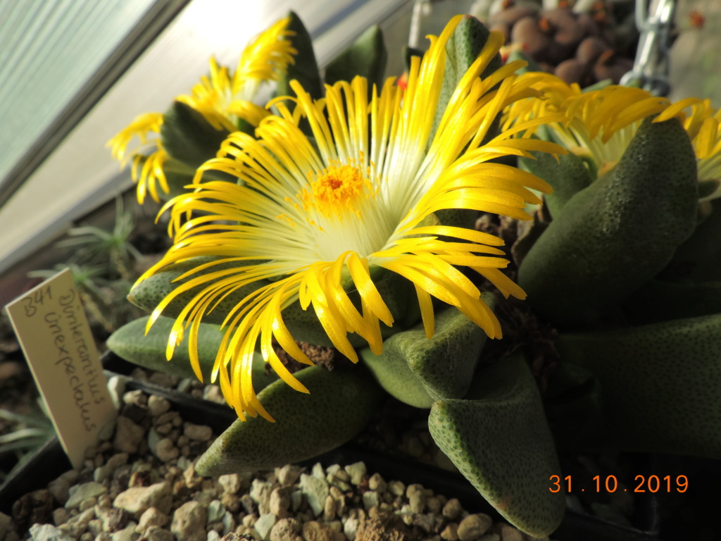 Cacti and Sukkulent in Köln, every day new flowers in the greenhouse Part 225 Bild4474