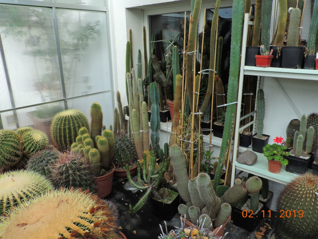 Cacti and Sukkulent in Köln, every day new flowers in the greenhouse Part 225 Bild4479