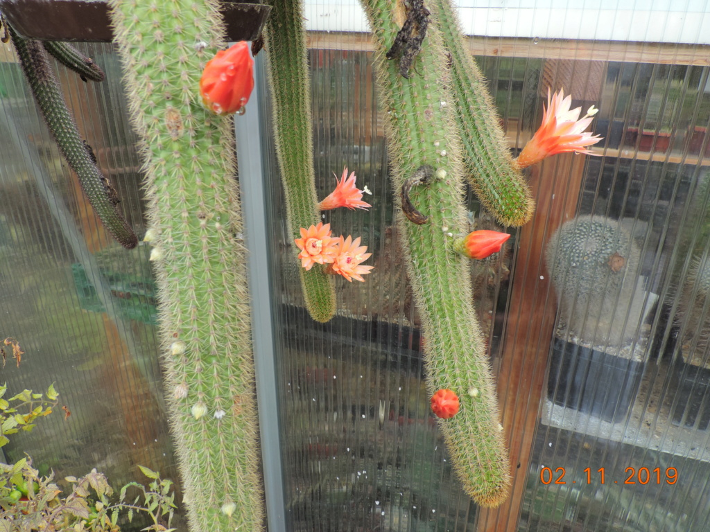 Cacti and Sukkulent in Köln, every day new flowers in the greenhouse Part 225 Bild4483