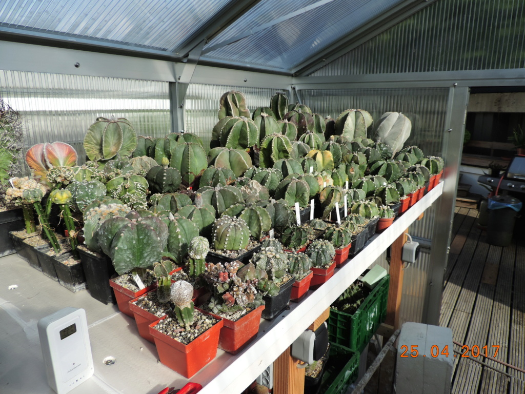 Cacti and Sukkulent in Köln, every day new flowers in the greenhouse Part 225 Bild4517