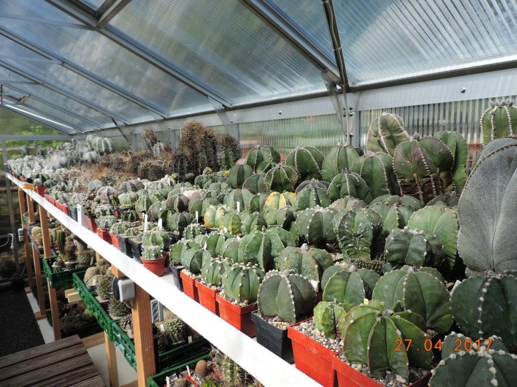 Cacti and Sukkulent in Köln, every day new flowers in the greenhouse Part 225 Bild4519