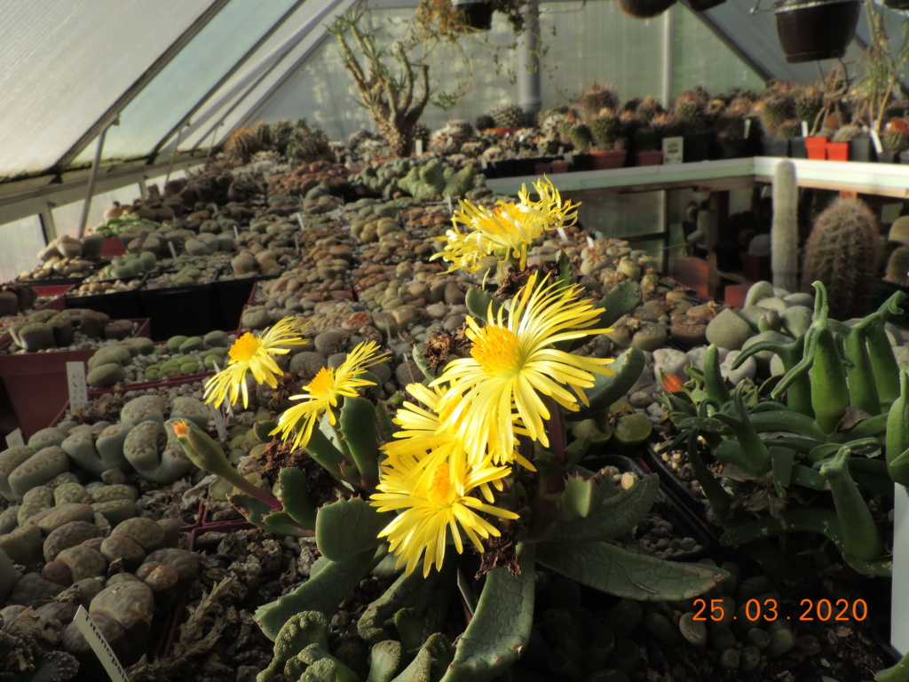 Cacti and Sukkulent in Köln, every day new flowers in the greenhouse Part 231 Bild4975