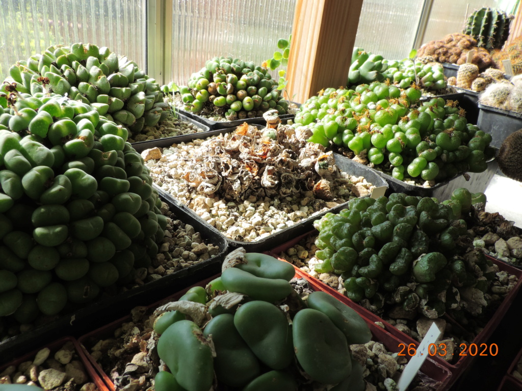 Cacti and Sukkulent in Köln, every day new flowers in the greenhouse Part 231 Bild5000