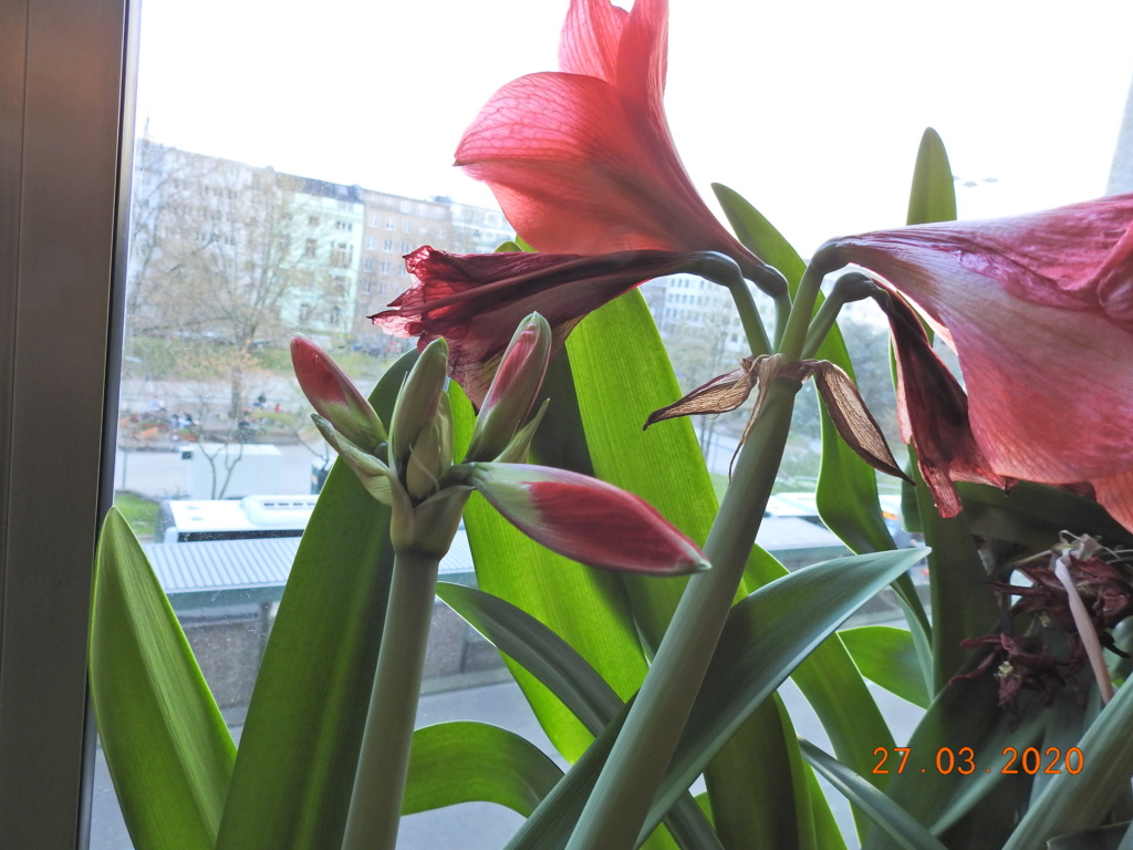 Cacti and Sukkulent in Köln, every day new flowers in the greenhouse Part 231 Bild5005