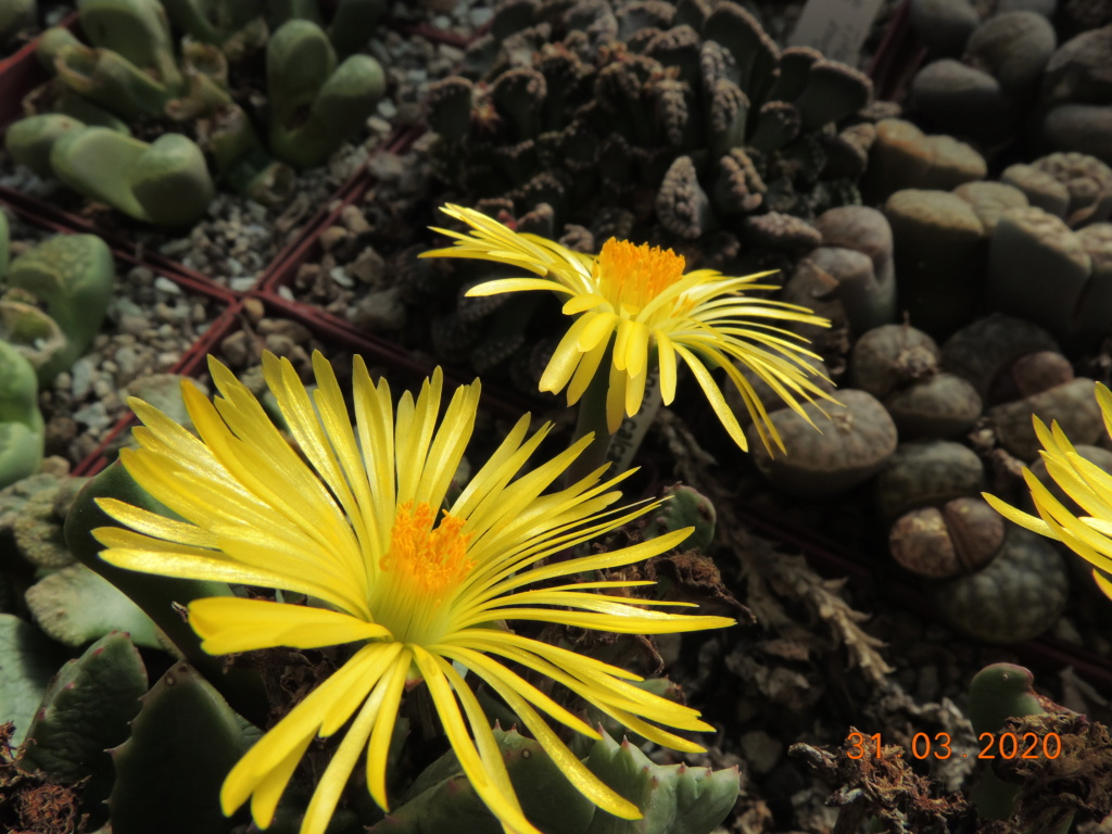 Cacti and Sukkulent in Köln, every day new flowers in the greenhouse Part 231 Bild5012
