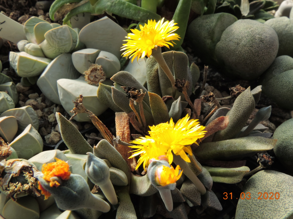 Cacti and Sukkulent in Köln, every day new flowers in the greenhouse Part 231 Bild5013