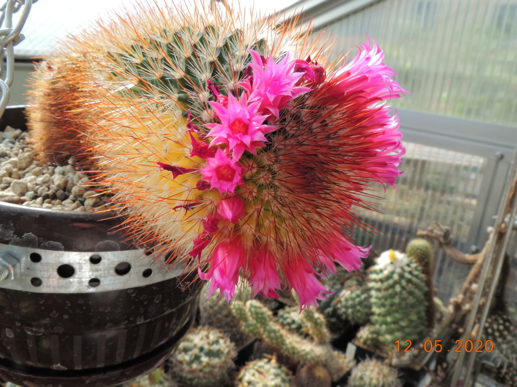 Cacti and Sukkulent in Köln, every day new flowers in the greenhouse Part 234 Bild5236