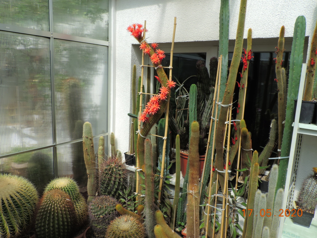 Cacti and Sukkulent in Köln, every day new flowers in the greenhouse Part 234 Bild5281